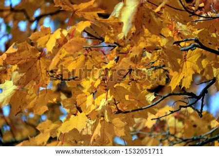 autumn leaf stove leaf symphony #1532051711