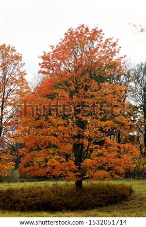 autumn leaf stove leaf symphony #1532051714