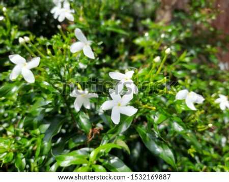 Top view of tiny white flowers blooming on the tree. A flower tree background texture. #1532169887