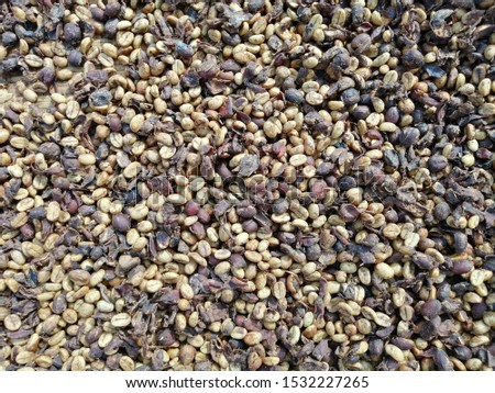 Coffee beans when dried and processed traditionally #1532227265