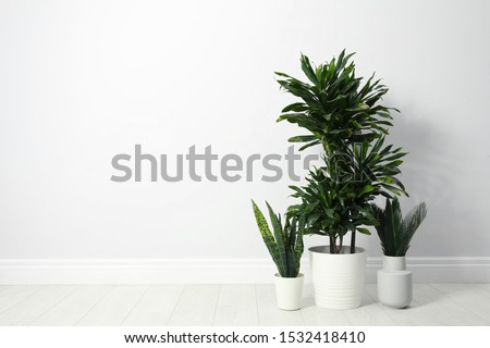 Tropical plants with lush leaves on floor near white wall. Space for text #1532418410