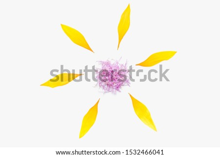 dried sunflower petals, sunflower petals on a white background, yellow petals, flower with yellow petals #1532466041