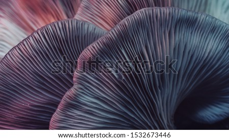 Close up beautiful bunch mushrooms color light in the tree background texture. Macro Photography View. Royalty-Free Stock Photo #1532673446