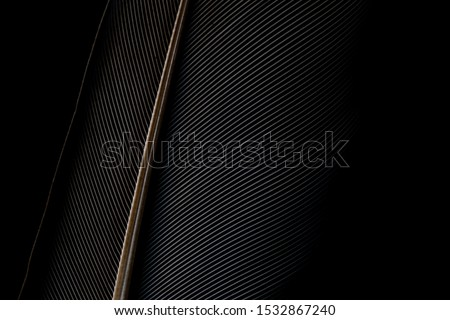 Black and white image of a piece of bird feathers, close-up,Black macro feather,Black raven feathers ,Serbia, Feather, Black Color, Crow - Bird,Abstract, Animal Body Part, Animal Pen, Animal Wing #1532867240