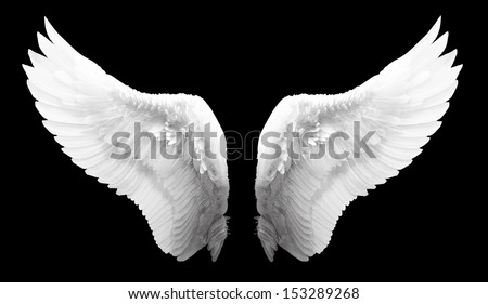 white wing isolated Royalty-Free Stock Photo #153289268