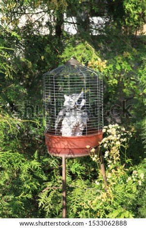Owl sitting in a cage. It is a bird of prey in captivity. This picture shows a stuffed owl.
