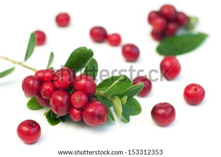 Cowberry isolated on white background, macro shot #153312353