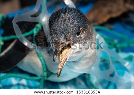 Marine plastic pollution and nature conservation concept - penguin trapped in plastic net #1533183554