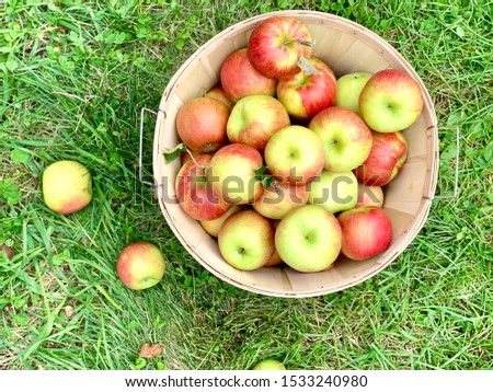Apples apples and more apples #1533240980