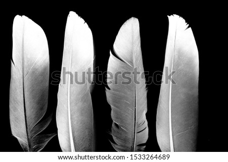 Feather of a bird on a black background. #1533264689