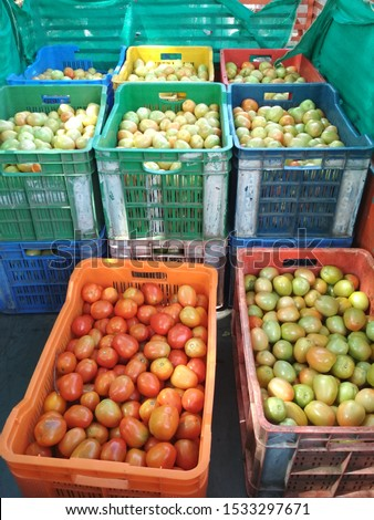 Tomato farming harvesting manually tomato crates fresh green red farmers market texture background Maharashtra India #1533297671