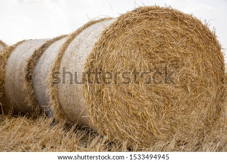 Straw bales on the field. Beautiful background with bales of straw. Landscape field with bales of straw. #1533494945