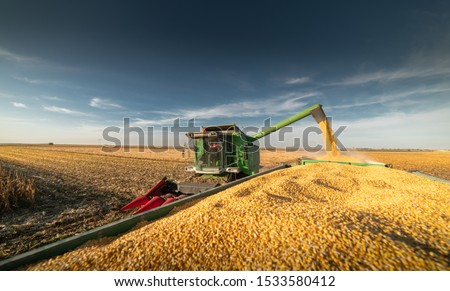 Pouring corn grain into tractor trailer after harvest at field Royalty-Free Stock Photo #1533580412