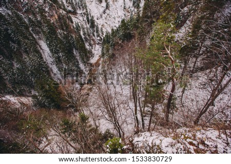 top view of tall pine trees #1533830729