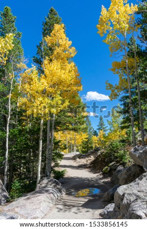 Clear blue sky and golden aspen trees along the trail in Rocky Mountain National Park #1533856145