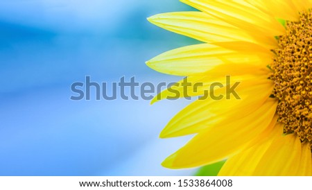 Background material  Sunflowers in full bloom #1533864008