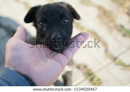 An abandoned little black puppy stands with his head on the palm of a man. The puppy is sad and scared. About the fragility of a puppy. Love the animals! Caring for the puppy #1534020467