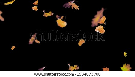 Autumn leaves Stock Image In Black Background