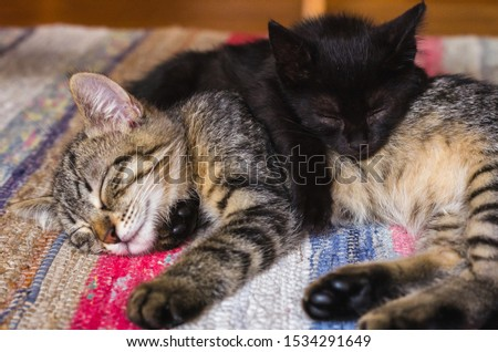 Black kitty and tabby kitty sleeping on top of each other #1534291649