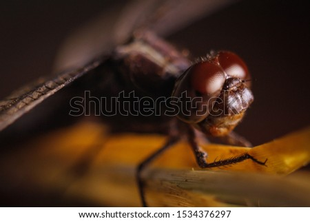 macro photo of dragonfly about to fly #1534376297