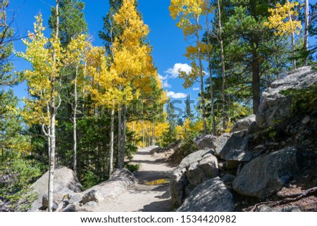 Mountain hiking trail lined with beautiful aspen trees on a clear autumn day #1534420982