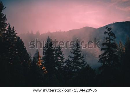 Misty Sunrise in pine trees #1534428986