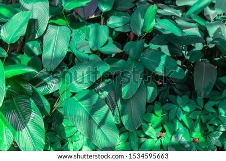 Moist green leaves in the flower garden #1534595663