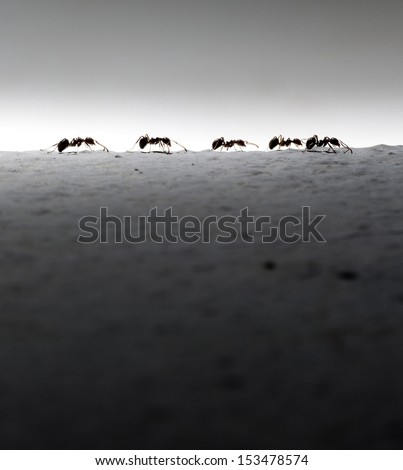 Silhouette of five ants. Business concept. #153478574