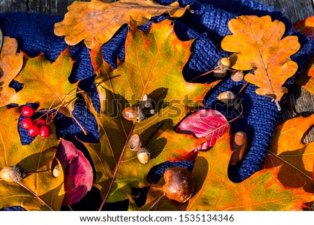 Colorful maple and oak  leaves, acorns, bunch of ash-berry and  warm scarf on background of wooden table. Concept of autumn and holiday relaxing atmosphere #1535134346