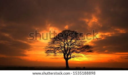 Naunton  Glocestershire England Rural Scene Isolated tree against a sunset sky #1535188898