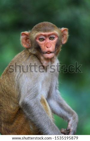 cute baby monkey face stock photos best monkey wildlife nature photography