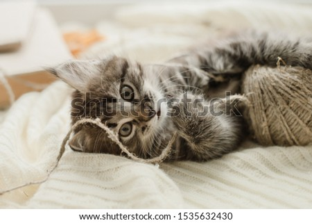 little cute gray kitten plays on a white plaid by the window #1535632430