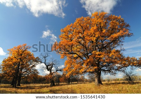 Beautiful autumn landscape of trees with leaves #1535641430