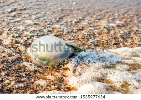 Beautiful purple jellyfish on the beach. The sand of the sea shore. Bright daylight. The jellyfish on the beach. #1535977634