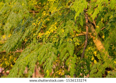 Beautiful green leaves on the top of the tree #1536133274
