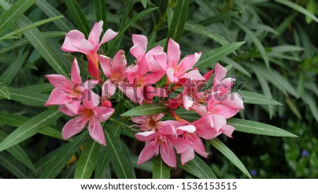 Tropical Flower, Colour, Beauty Flower Plant growth in nature. Closeup Flora Blossom in Garden Summer, Beauty Tropical Flower Plant growth in nature. Closeup Flora Blossom in Garden. #1536153515