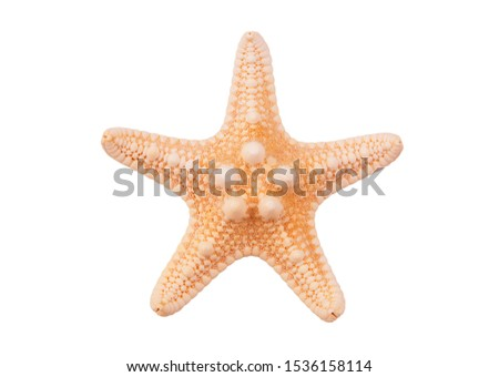 Red starfish isolated on white background Royalty-Free Stock Photo #1536158114