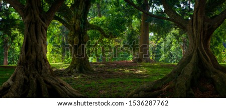 Deep tropical jungles of Southeast Asia in august #1536287762