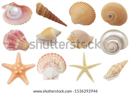 Collection of seashells and starfish  isolated on white background #1536292946