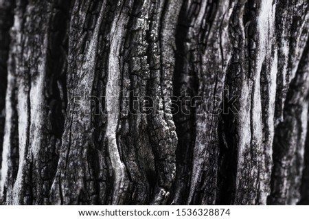 Bark texture Bark wood background. Old tree bark texture. Tough rude wooded surface pattern. Macro close up. #1536328874