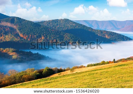 gorgeous sunny morning in mountains. picturesque carpathian countryside in autumn. fog in the valley. trees in fall colours. green grass on the meadow. wonderful weather with fluffy clouds on the sky #1536426020