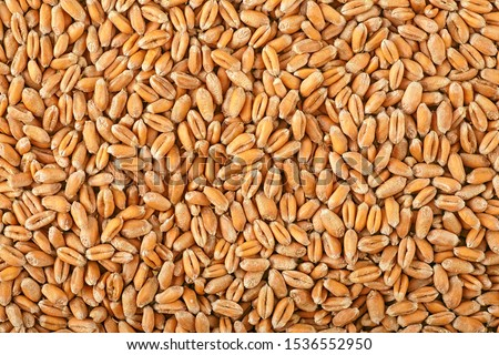 Wheat grain as background texture, top view. #1536552950