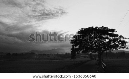 the black and white landscape of the sky and the silhouette of a large tree at the edge of a rice field road. #1536850640