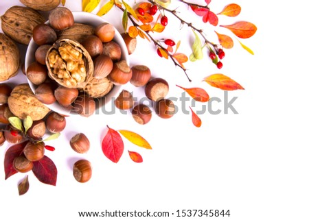 Barberry branches, nuts and autumn leaves on a white background. Autumn concept. #1537345844