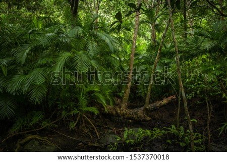 Tropical jungle, Tropical rainforest with different trees. #1537370018