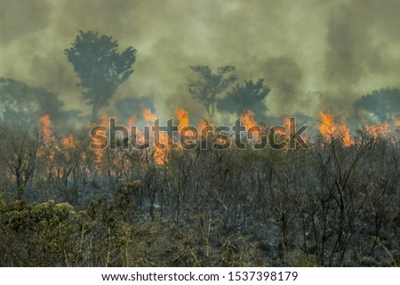 Fires in the Amazon forest - global climate change. Burning rainforest. Royalty-Free Stock Photo #1537398179
