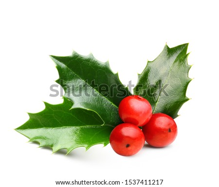 Holly berry leaves Christmas decoration isolated on white background #1537411217