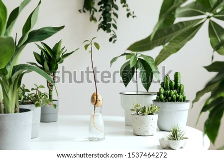 Stylish and botany composition of home interior garden filled a lot of plants in different design, elegant pots on the white table. White backgrounds walls. Green is better. Spring blossom. Template. #1537464272
