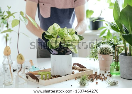 Home gardener transplanting plant in ceramic pots on the white wooden table. Concept of home garden. Spring time. Stylish interior with a lot of plants. Taking care of home plants. Template. #1537464278