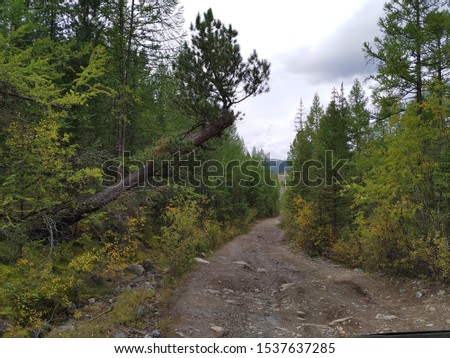 dirt mountain road through the forest #1537637285